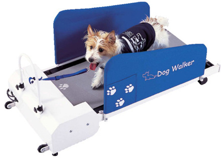 12707dog_walker